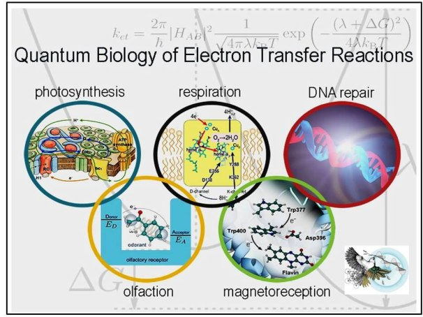 Fig 7: Quantum phenomena that have been detected at the life macro-scale