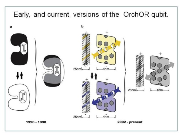 Fig.18 : Early, and current, versions of the OrchOR qubit. (a)Schematic cartoon version of OrchOR tubulin protein qubit used in OrchOR publications mainly from 1996 to 1998.On left ,tubulin oscillates between 2states with 1nanometer conformational flexing (10%tubulindiameter). On right, both state sexist in quantum superposition. (Irrespective of the schematic cartoon the 1 nanometer displacement has never been implemented in OrchORcalculations). The states are shown to correlate with electron locations(dipole orientations)in two adjacent phenyl (or indole)resonance rings in a non-polar 'hydrophobic pocket'. (b)Schematic cartoon version of the OrchOR qubit developed since 2002 (following identification of tubulin structure by electron crystallography. Each tubulin is shown to have 9 rings representing 32 actual phenyl or indole rings per tubulin, with coupled, oscillating London force dipole orientations among rings traversing 'quantum channels' , aligning with rings in adjacent tubulins in helical pathways through microtubule lattices. On the right, superposition of alternative tubulin and helical pathway dipole states. There is no conformational flexing. Mechanical displacement occurs at the femtometer level of tubulin atomic nuclei (not shown) . Reimers et al . continually, and exclusively, criticize the obsolete, non- implemented version on left(a), and ignore the actual OrchOR dipole pathway qubit version on right(b).