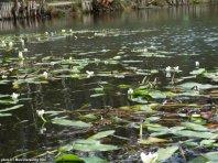 Keston park pond