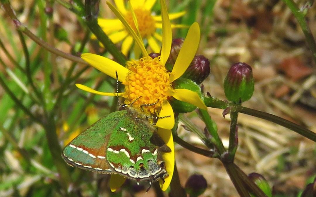 Oh, the butterflies!