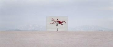 Myoung-Ho-Lee-Tree-5-lensculture