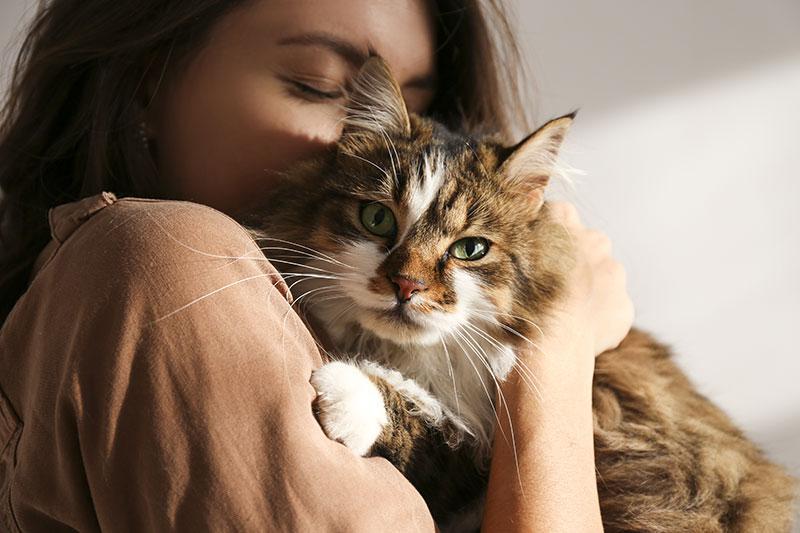 A quel âge peut-on stériliser un chat ?