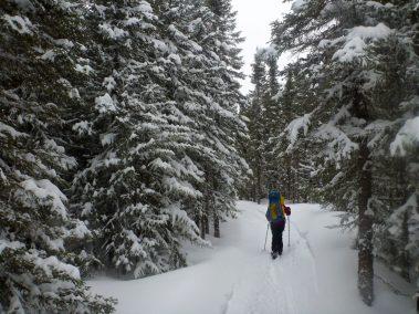 Ski de randonnée nordique Demie-Traversée de Charlevoix 1