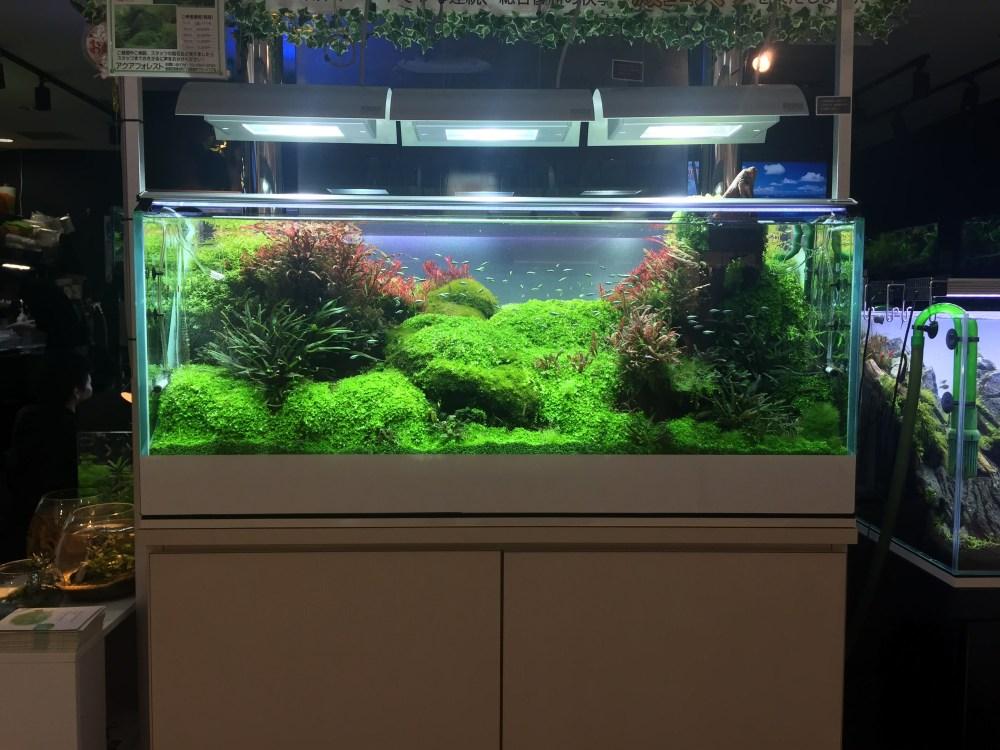 厳選紹介!東京都内のハイレベルな熱帯魚・水草・アクアリウムショップ一覧
