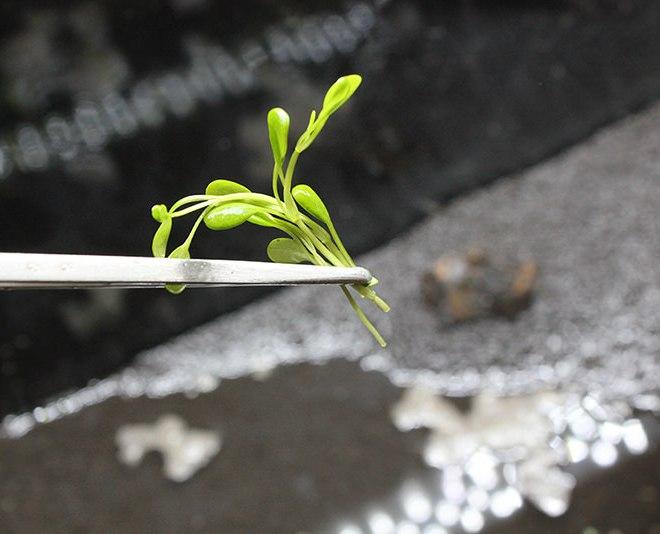前景草を植える