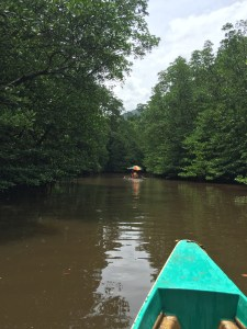 PuertoPrincesa.com – Mangrove Paddle Boat Tour. Photograph by EM@QUE.COM