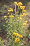 The wildflowers were beautiful