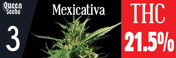 cannabis mexicativa depression
