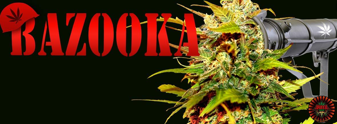 Bazooka - Queen Seeds