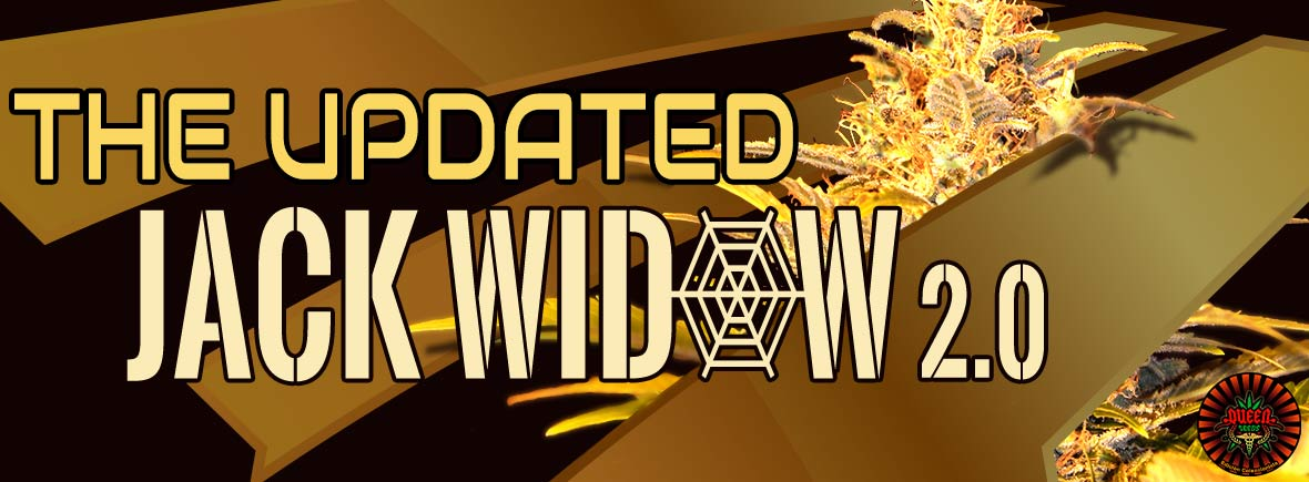 Jack Widow 2.0 - Queen Seeds