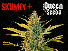 Skunky + Queen Seeds