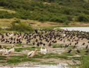 Bird species found in the different sectors of Queen Elizabeth National Park - Uganda Safari News