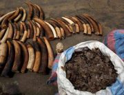 Vietnamese Ivory smugglers intercepted at Uganda's Entebbe International Airport