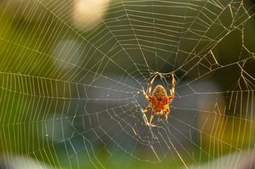 Its Spider Season!