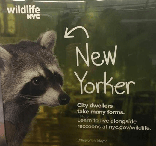 https://i1.wp.com/queenoftheclick.com/wp-content/uploads/2016/05/nyc-wants-you-to-live-with-raccoons.png