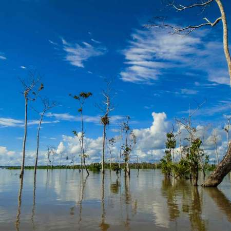 Amazonas State Government Launches Program to Halt Deforestation