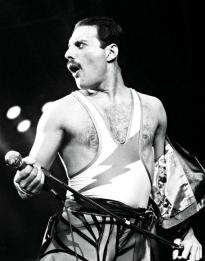Freddie - TW T 1984-1985