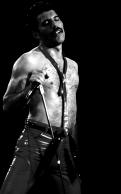 Freddie TGT '80