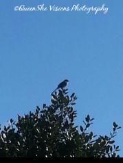 Bird on the Tip of Tree