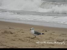 Sand an Seagull