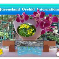 Charlie Robino: Loving Orchids in Far North Queensland