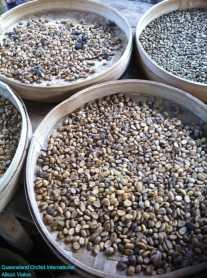 Luwak Coffee Production at Bali (2)
