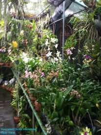 Orchid Nursery at Sanur, Bali (17)