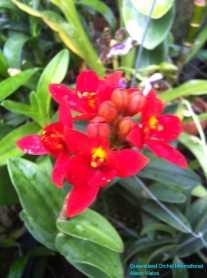 Orchid Nursery at Sanur, Bali (20)