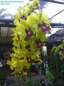 Orchid Nursery at Sanur, Bali (5)