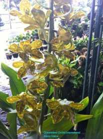 Orchid Nursery at Sanur, Bali (9)