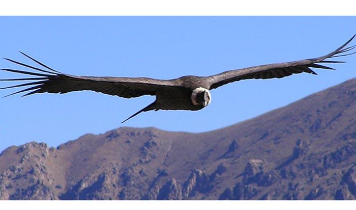 Concierto El condor pasa esperanza andina el 25 de abril