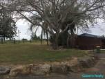 [06] Marburg 10 Acres - Driveway to Property