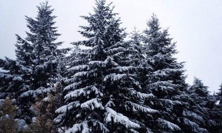 Dear Winter and Pecha Kucha