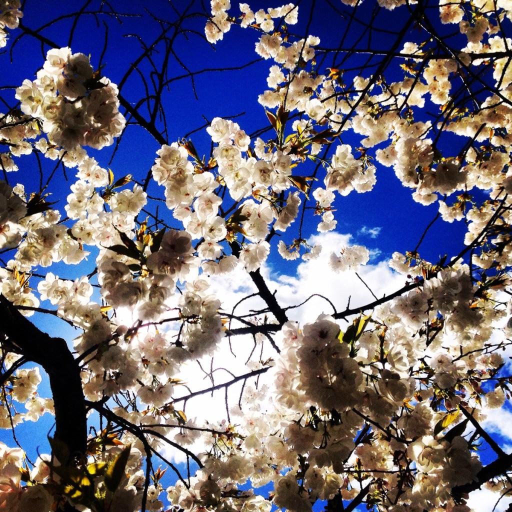Spring Queenstown