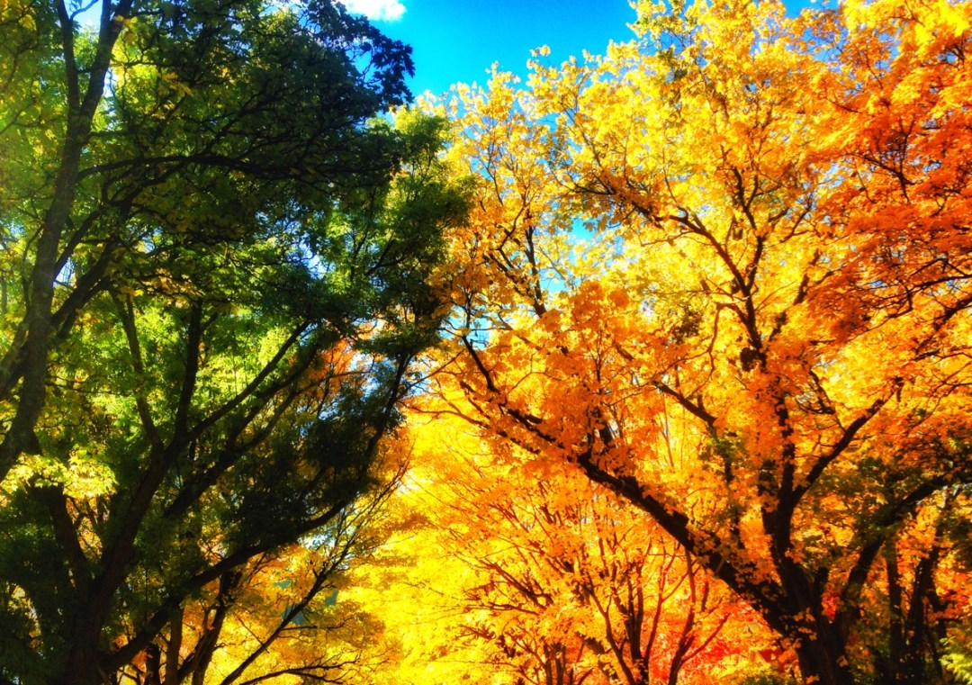 Fall in Love with Central Otago this Autumn