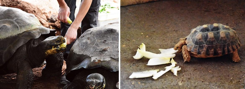 Nourrissage des animaux à la ferme aux crocodiles