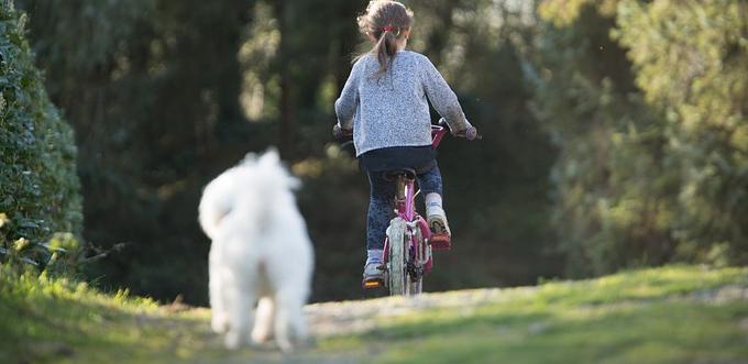 Balade à vélo en camargue