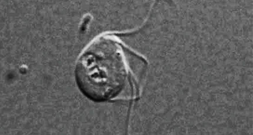 El descubrimiento de la primera eucariota sin mitocondria nos obliga a reescribir los libros