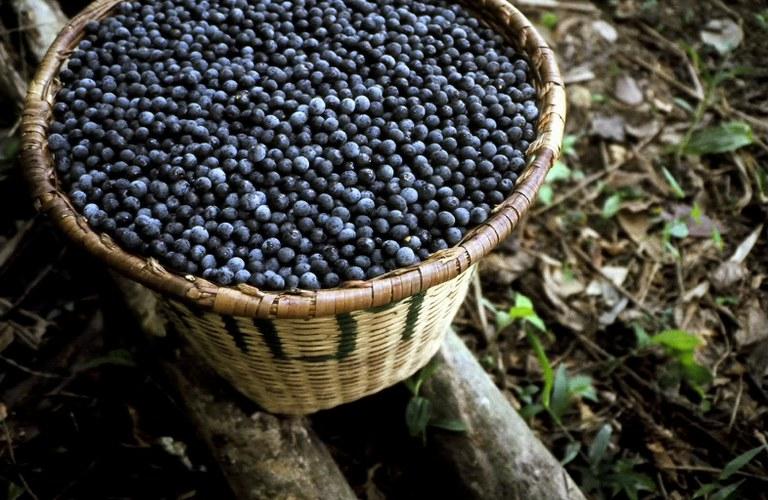 Alemanha investe € 5 mi para ampliar venda de produtos amazônicos