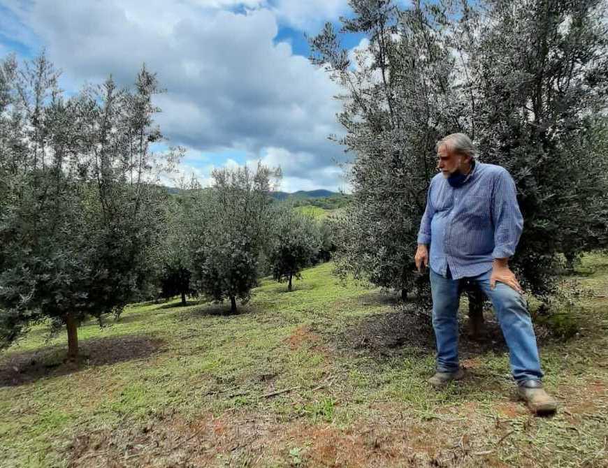 Dono do Azeite Rossini fala sobre a produção e a Mantiqueira