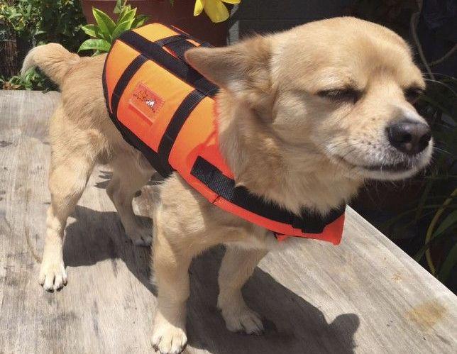 Foto perro ¿Dónde ir con mi mascota?