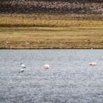 Laguna de Arabilla altiplano de Chile Iquique , Colchane