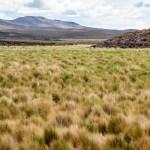 Altiplano de Chile Iquique , Colchane