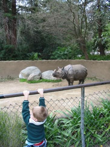 los-angeles-zoo-rhinocerous