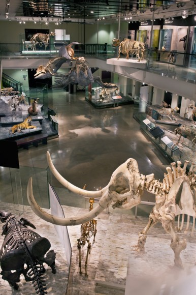 Los-Angeles-Natural-History-Museum-Gallery-View-Back
