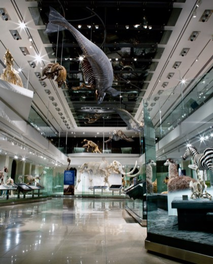 Los-Angeles-Natural-History-Museum-Gallery-view-ground-floor