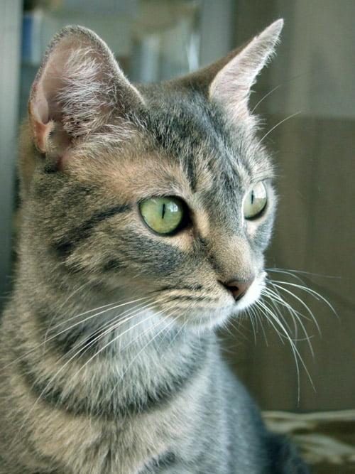 Proyecto Gato en Vigo necesita ayuda.