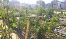 Huertas urbanas en el Pau de Navia