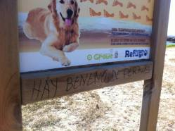 Playa para perros… con peligro