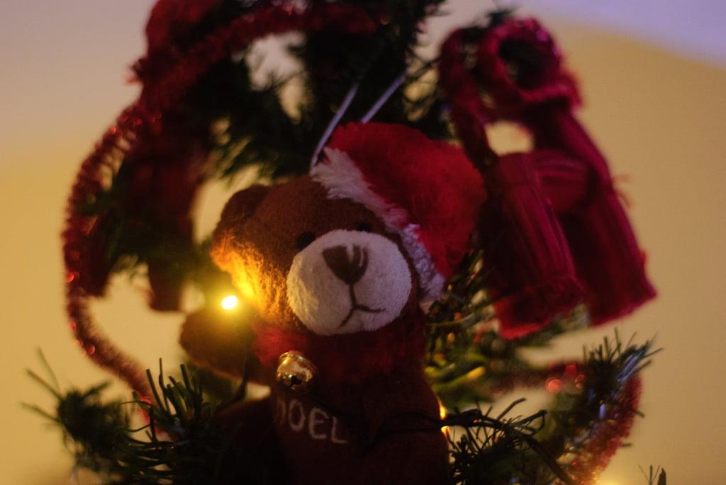 Teddy Bear en Vigo